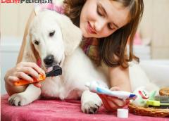 زمان تقریبی افتادن دندانهای شیری در توله سگ ها